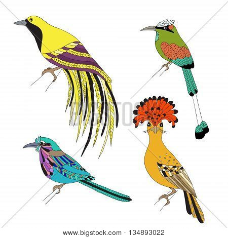 Set of tropical birds hand draw. Emperor Bird of Paradise, royal flycatcher, Lilac-breasted Roller and Turquoise-browed motmot on a white background.