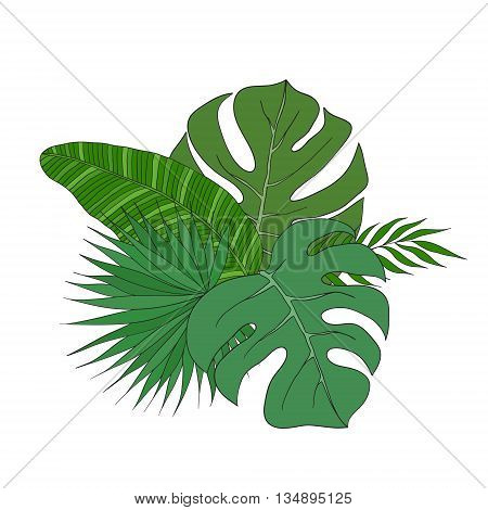 The set of leaves of different species of palm trees on a white background.
