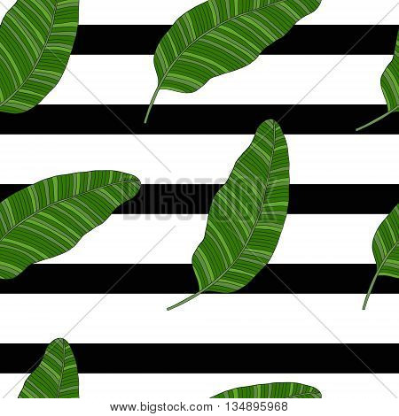 The leaves of tropical palm trees on the striped black-and-white background. Pattern.