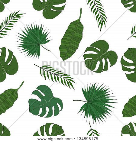 The leaves of the tropical palm trees on a white background. Pattern.