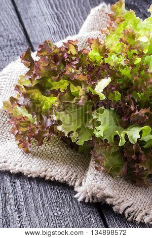 Fresh crispy lettuce and Lollo Rossa on sacking. The source of vitamins and minerals detox diet health or vegetarian food concept. Vertical