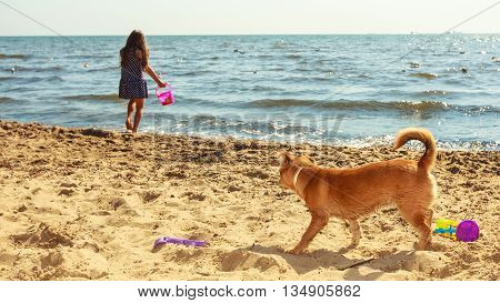 Connection between animals and kids concept. Sportive mixed race dog and girl kid playing together. Active child with puppy having fun.