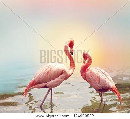 Two Pink Flamingos near water