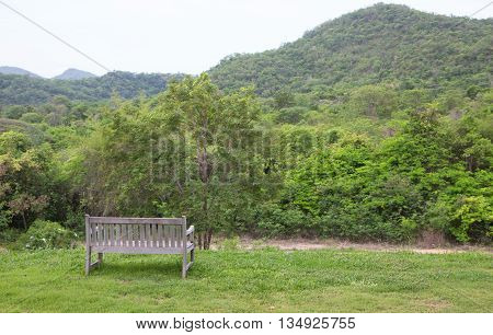 wooden bench in green garden lawn for resting and relax