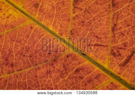 golden yellow leaf texture pattern autumn fall grunge vintage herbarium abstract background large detailed horizontal grungy textured vivid copy space macro closeup