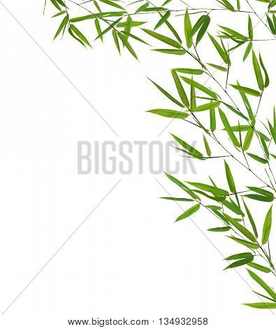 corner from green bamboo branches isolated on white background