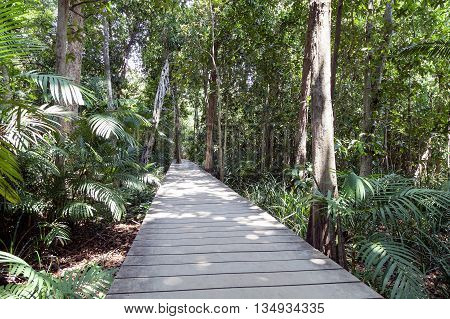 Wooden bridge in a tropical forest in phang nag thailand