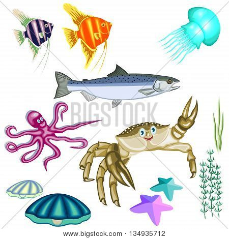 representatives of marine life:fish,crab,octopus,jellyfish,shells,seaweed and sea stars isolated on white background.