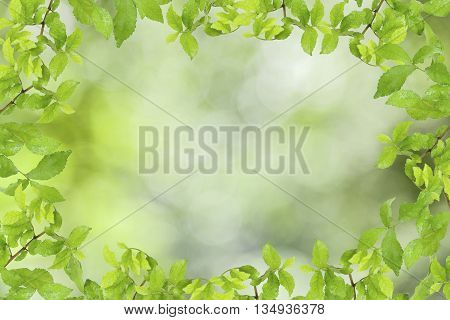 Green leaves frame on abstract green nature background