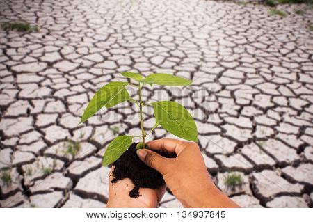 Green returns to naturepeople ecology biology and environment concepthand holding green tree on cracked ground from rainless