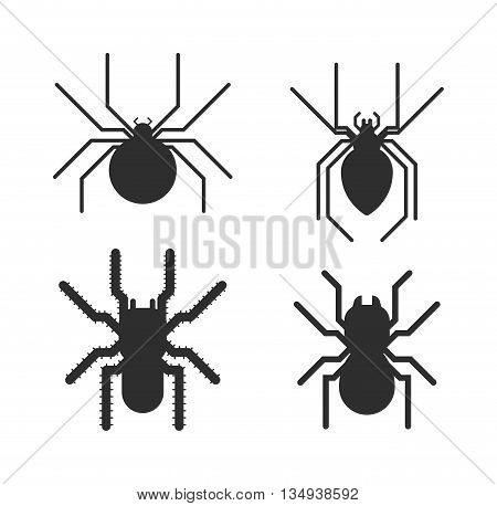 Vector poisonous spiders. Poisonous spiders arachnid danger isolated