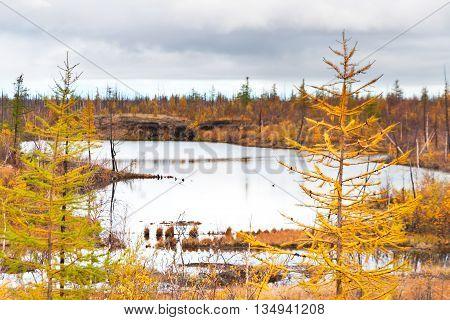 Lake In Tundra In The Taimyr Peninsula