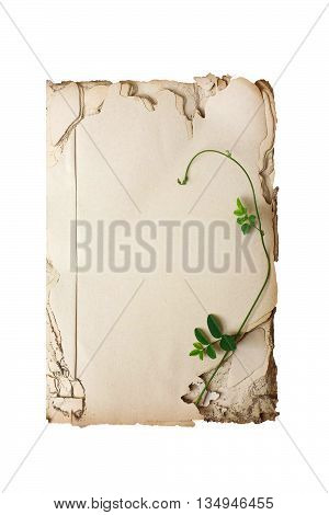 Open old book vintage isolated on white background