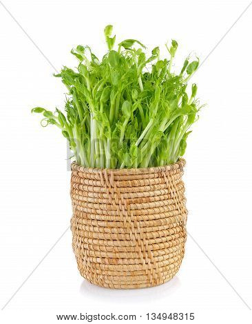 green pea sprouts in basket on white background