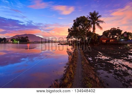 Reflection Sunrise of view of paddy field in Bukit Mertajam Penang, Malaysia