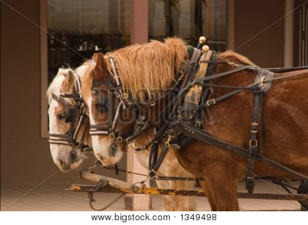Work Horses At Work