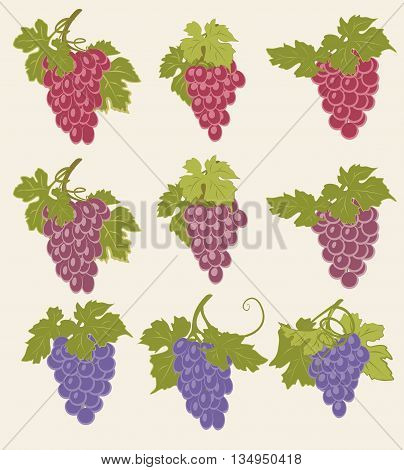 A set of bunches of grapes of different colors.