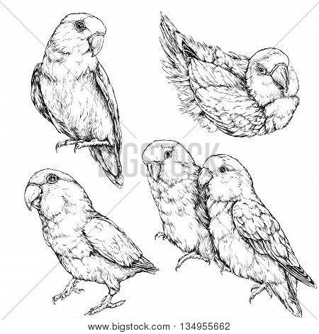 Set of cute funny lovebird parrots. Vector illustration