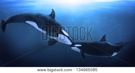 A beautiful illustration of marine mammals in the ocean water