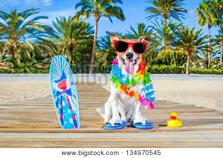 Summer Vacation Paradise Dog