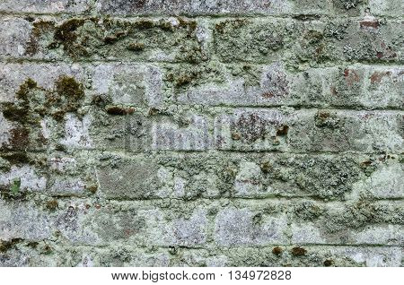 Background of old mossy brick wall surface