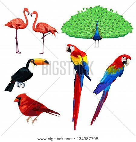 A vector illustration of different type of bird icons