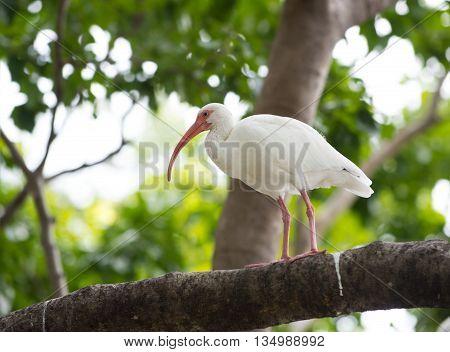 Cute Sweep Bird