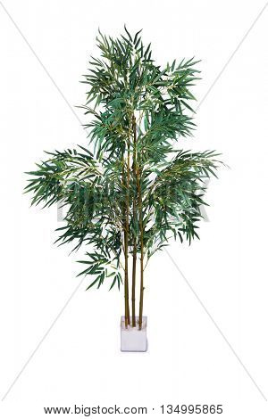 Areca palm isolated on the white background