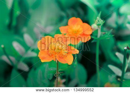 оранжевый цветок в саду зеленая трава лето