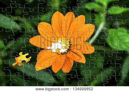 Jigsaw effect on beautiful orange Meican Sunflower also known as Mexican Marigold or Tithonia rotundifolia