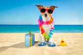 Tourist Dog At The Beach poster