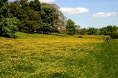 Butercup Meadows