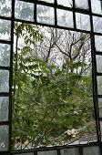 stock photo of stained glass  - Trees and debris outside the broken window of an abandoned factory - JPG
