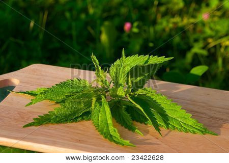 Nettle On A Board