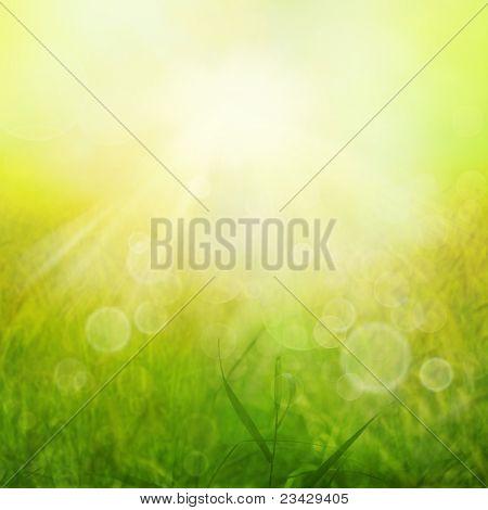 Primavera Floral fundo com grama verde