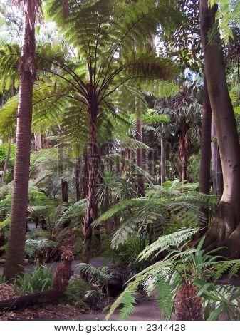 Melbourne Botanic Gardens Fern Gully