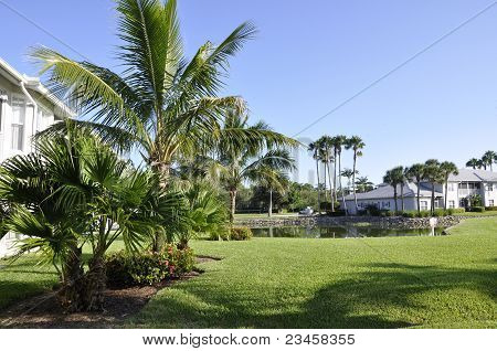 Palm Trees In Naples, Florida
