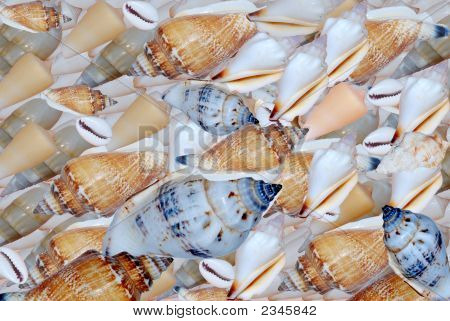A Shell-Field. A Lot Of Different Shell