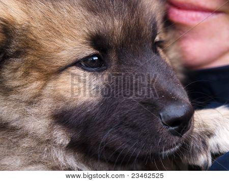 Cachorro em Closeup