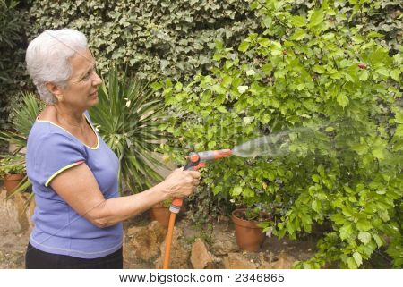 Watering My Plants