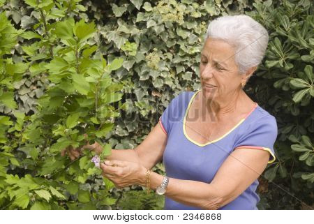 Senior Lady In Her Garden
