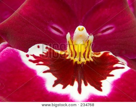 Orchid Close Up