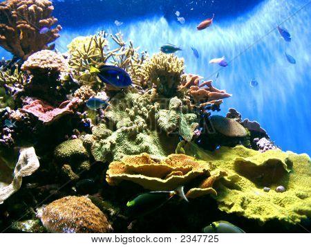 Underwater Fish Tank