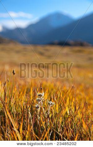 Autumn mountain meadow