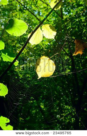 sun on the Web