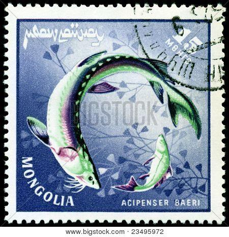 Vintage  Postage Stamp. Fish Acipenser Baeri.