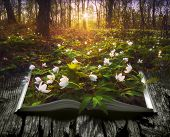 Many Spring Flowers On The Pages Of An Open Magical Book In A Deep Fairytale Forest. Nature Concept. poster