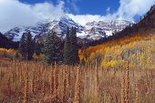 Maroon Bells, Tall Weeds poster