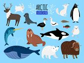 Arctic Animals. Cute Animal Set Of Arctic Or Alaska Vector Illustration For Education, Penguin And P poster