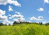 Beautiful Rural Summer Landscape With Flowering Wild Flowers On Meadow And With Blue Sky, White Clou poster